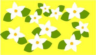 ジャスミン黄色.jpg